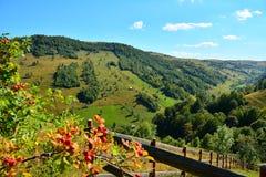 Berglandskap med grönt gräs, granskogen och landshuset royaltyfria foton