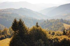 Berglandskap med granar Arkivfoto