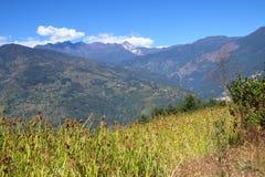 Berglandskap med hirsfältet på förgrunden, Nepal royaltyfria foton