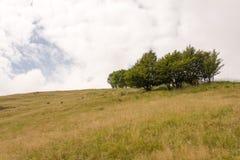Berglandskap med några träd Arkivfoto