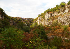 Berglandskap med träd och buskar Royaltyfri Bild