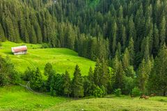 Berglandskap nära Gstaad, Schweiz arkivbild