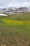 Berglandskapet med guling och blått blommar och smältande snö arkivbild