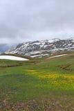 Berglandskapet med guling och blått blommar och smältande snö royaltyfria bilder