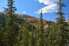 Berglandskapet med sörjer träd Fotografering för Bildbyråer