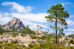 Berglandskapet med sörjer trädet under himmel Arkivbilder