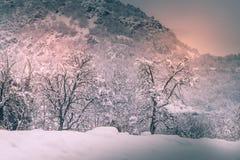 Berglandskapet med snö, snö täckte träd Arkivfoton
