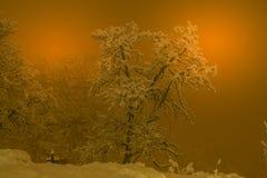 Berglandskapet med snö, snö täckte träd Arkivbilder