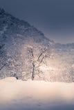 Berglandskapet med snö, snö täckte träd Royaltyfria Bilder