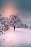 Berglandskapet med snö, snö täckte träd Arkivfoto