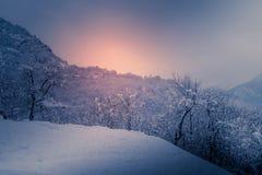 Berglandskapet med snö, snö täckte träd Arkivbild