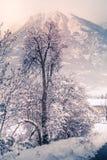 Berglandskapet med snö, snö täckte träd Royaltyfria Foton