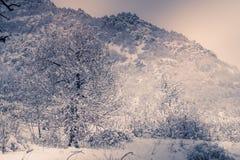 Berglandskapet med snö, snö täckte träd Royaltyfri Fotografi
