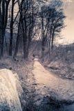 Berglandskapet med snö, snö täckte träd Fotografering för Bildbyråer