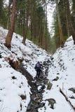 Berglandskapet med sörjer trän på vintertid Arkivfoton