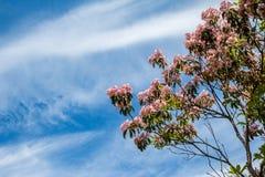 Berglaurier in bloei tegen een blauwe hemelachtergrond stock afbeelding