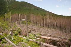 Bergliggande med avverkade trees Arkivbilder