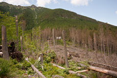 Bergliggande med avverkade trees Royaltyfri Fotografi