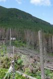 Bergliggande med avverkade trees Royaltyfria Bilder