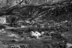 Berglinn på black&white Royaltyfria Bilder