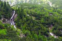 Bergliten vik i den Tatra nationalparken Royaltyfri Foto