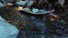 Bergliten vik med kristallklart vatten i flöde för vatten för höstskog löst lager videofilmer