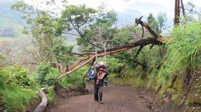 Bergmann trägt den Wagen zur Spitze des aktiven Vulkans Kawah Ijen stockbild