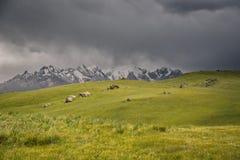 Bergmaxima med snö, gräsplan betar under åskväder i på Bashi, Kirgizistan Arkivfoton