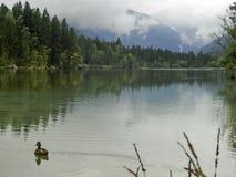 Bergmaxima som döljas i moln och mist Arkivfoton