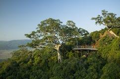 Bergmening met grote boom en villa's Stock Foto