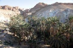 Bergoase Chebika, Tunesië Stock Foto's