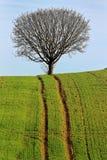 Bergopwaarts spoor aan boom Stock Foto's
