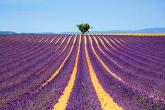 Bergopwaartse lavendel en eenzame boom De Provence, Frankrijk royalty-vrije stock foto's