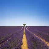 Bergopwaartse lavendel en eenzame boom De Provence, Frankrijk royalty-vrije stock afbeelding