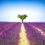 Bergopwaartse lavendel en eenzame boom De Provence, Frankrijk stock fotografie
