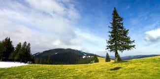 Bergpanorama med dramatisk himmel och ensamt sörjer trädet Royaltyfria Foton