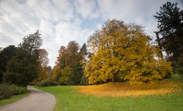 Bergpark wilhelmshoehe kassel germany in the autumn. The bergpark wilhelmshoehe kassel germany in the autumn Royalty Free Stock Photo