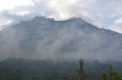 Bergpijnbomen in mist Royalty-vrije Stock Fotografie