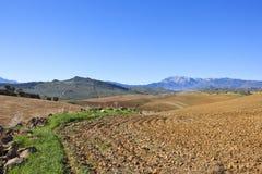 Bergplogjord och olivgröna dungar arkivbilder