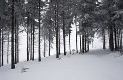 bergpolermedelvinter Royaltyfria Foton