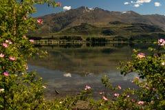 Bergreflexioner i Wanaka sjön med den naturliga blommaramen Royaltyfri Bild