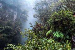 Bergregenwoud, dichtbij de waterval Pailon del Diablo Stock Afbeeldingen