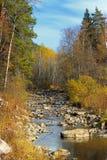 Bergrivier in de herfstbos Stock Fotografie