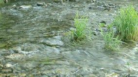 Bergrivier die door Vegetatie vloeien stock videobeelden