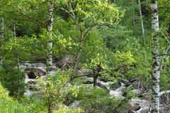 Bergrivier die in het bos stromen Stock Fotografie