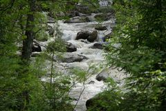 Bergrivier die in het bos stromen Royalty-vrije Stock Afbeeldingen