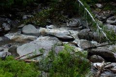 Bergrivier die in het bos stromen Royalty-vrije Stock Foto's