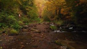 Bergrivier en Waterval in Autumn Forest Ukraine stock footage
