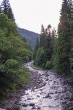 Bergrivier in het bos Stock Afbeeldingen
