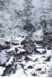 Bergrivier in het bos van de bergwinter met snow-covered bomen en sneeuwval Stock Foto's